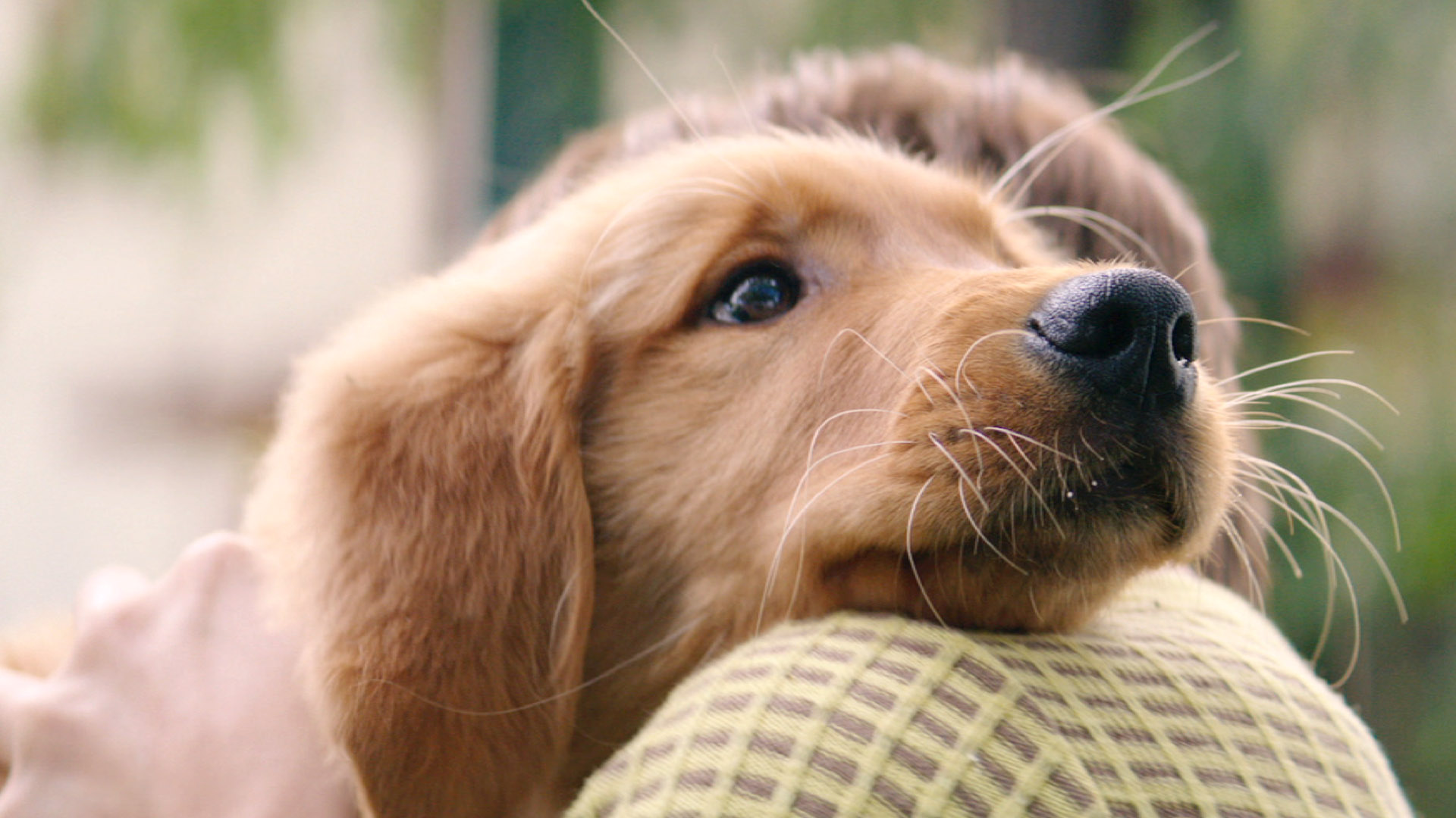 A Dog S Purpose Onlne