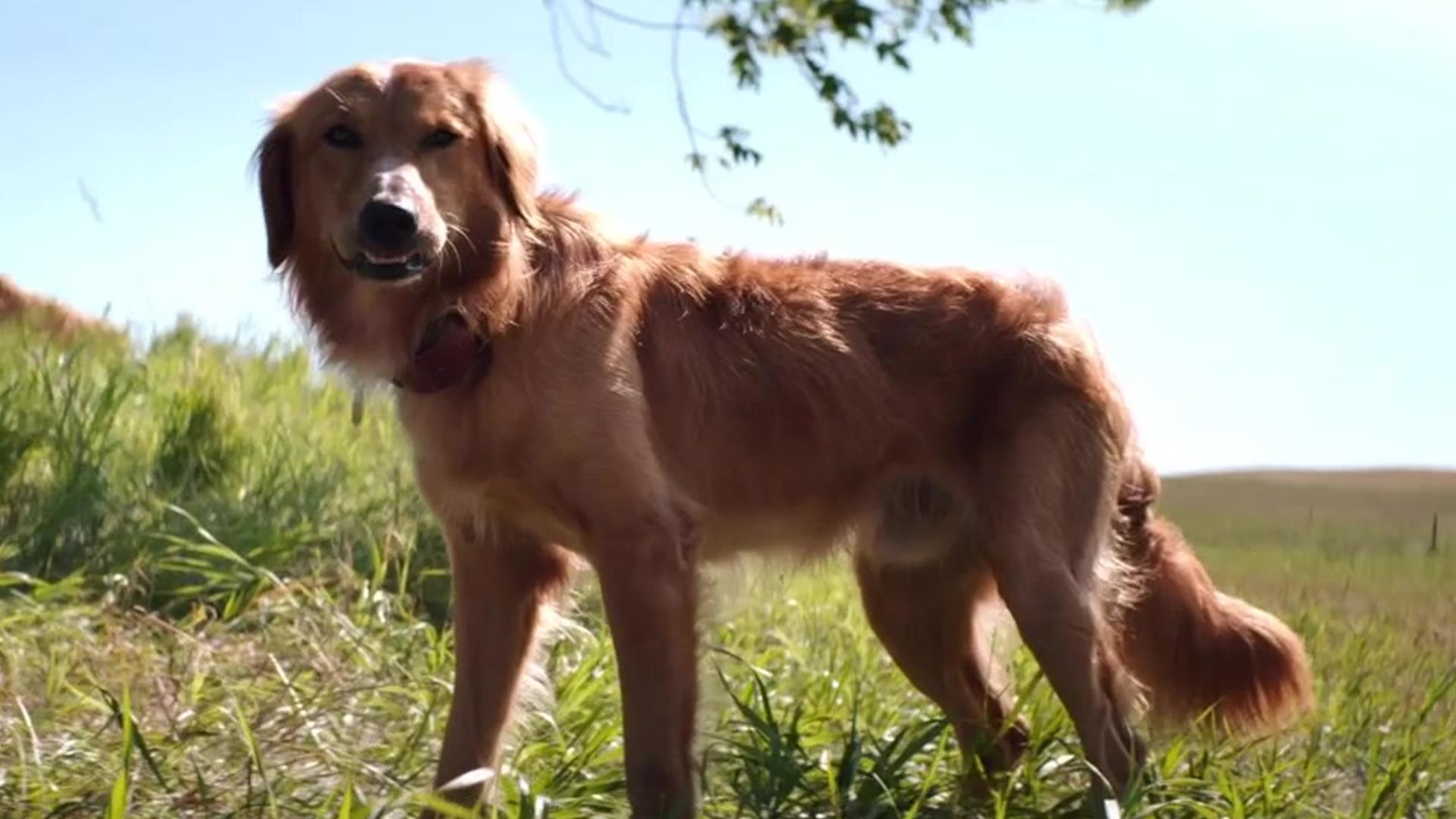 A Dog's Purpose: A Dogs Purpose TV Spot - Now Playing ...